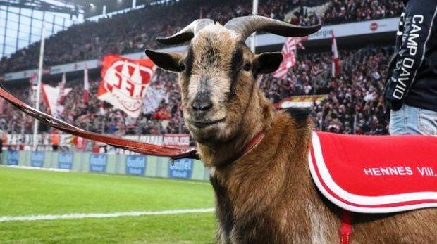 1 Fc Köln Gewinnt Streit Um Wwwfcde Vor Dem Lg