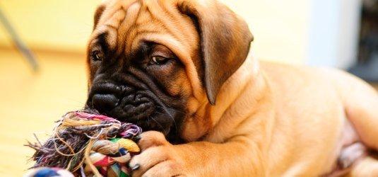 Mietvertrag Verbot Von Hunde Und Katzenhaltung Unwirksam