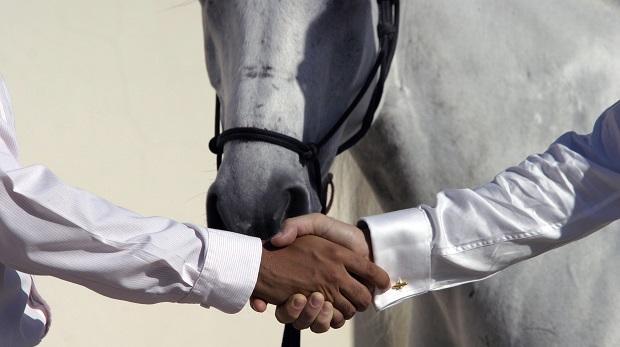 Pferderechtlerin:'Pferde sind die neuen Gebrauchtwagen'