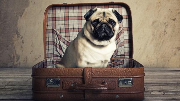 LG Nürnberg zur Tierhaltung in Mietwohnung: Mops muss nicht ausziehen